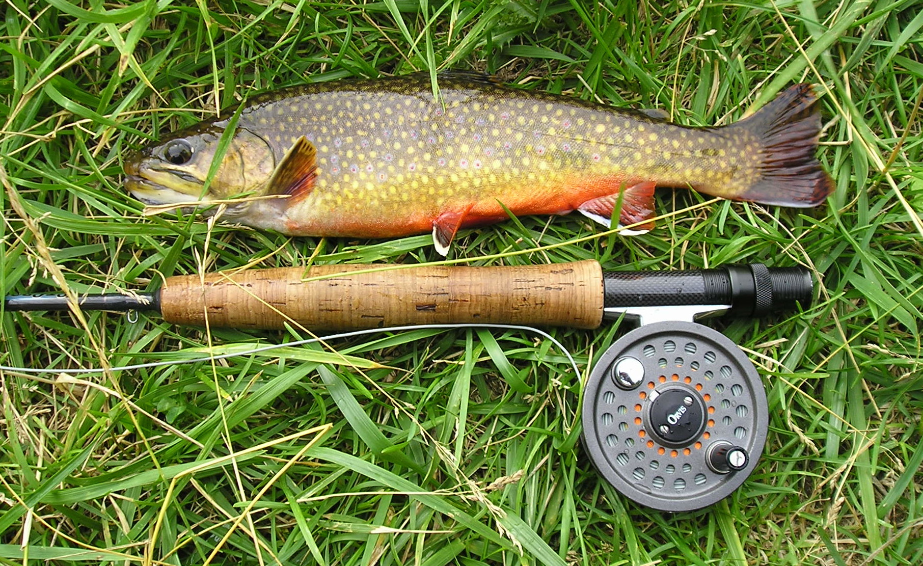 Big things on big spring casting across for Spring creek pa fishing report