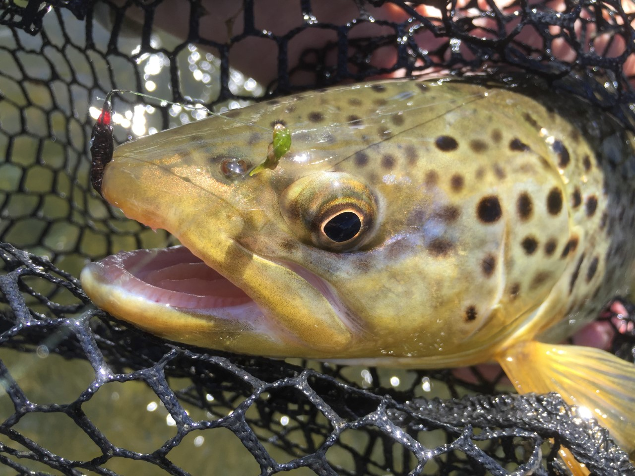 42 ways to catch more fish guaranteed casting across for Fish and more
