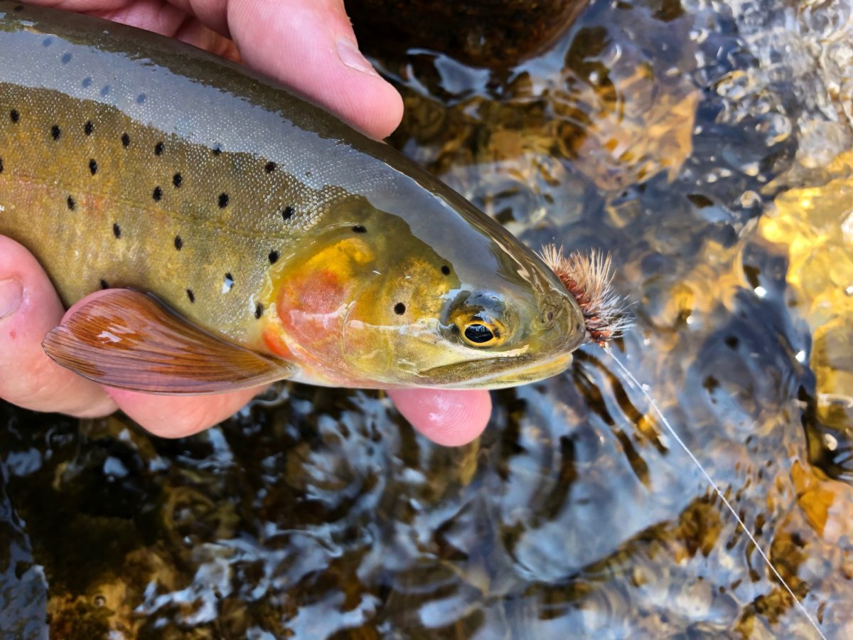 Mobs, Moments, & Fly Fishing Photography